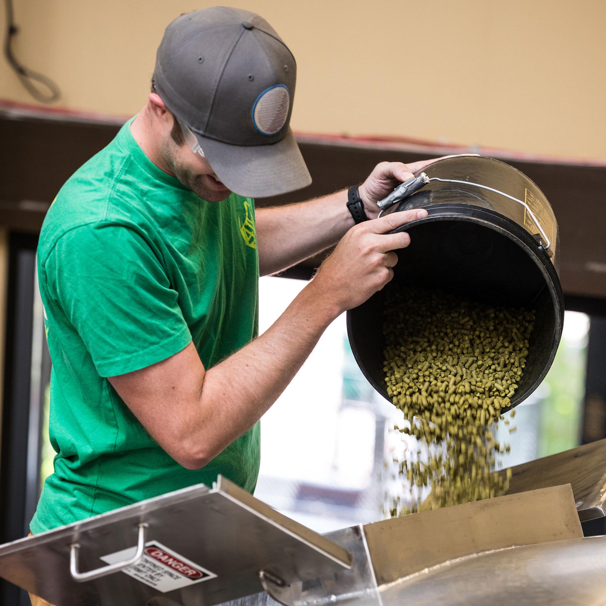 Man dumping bucket of hops into a machine