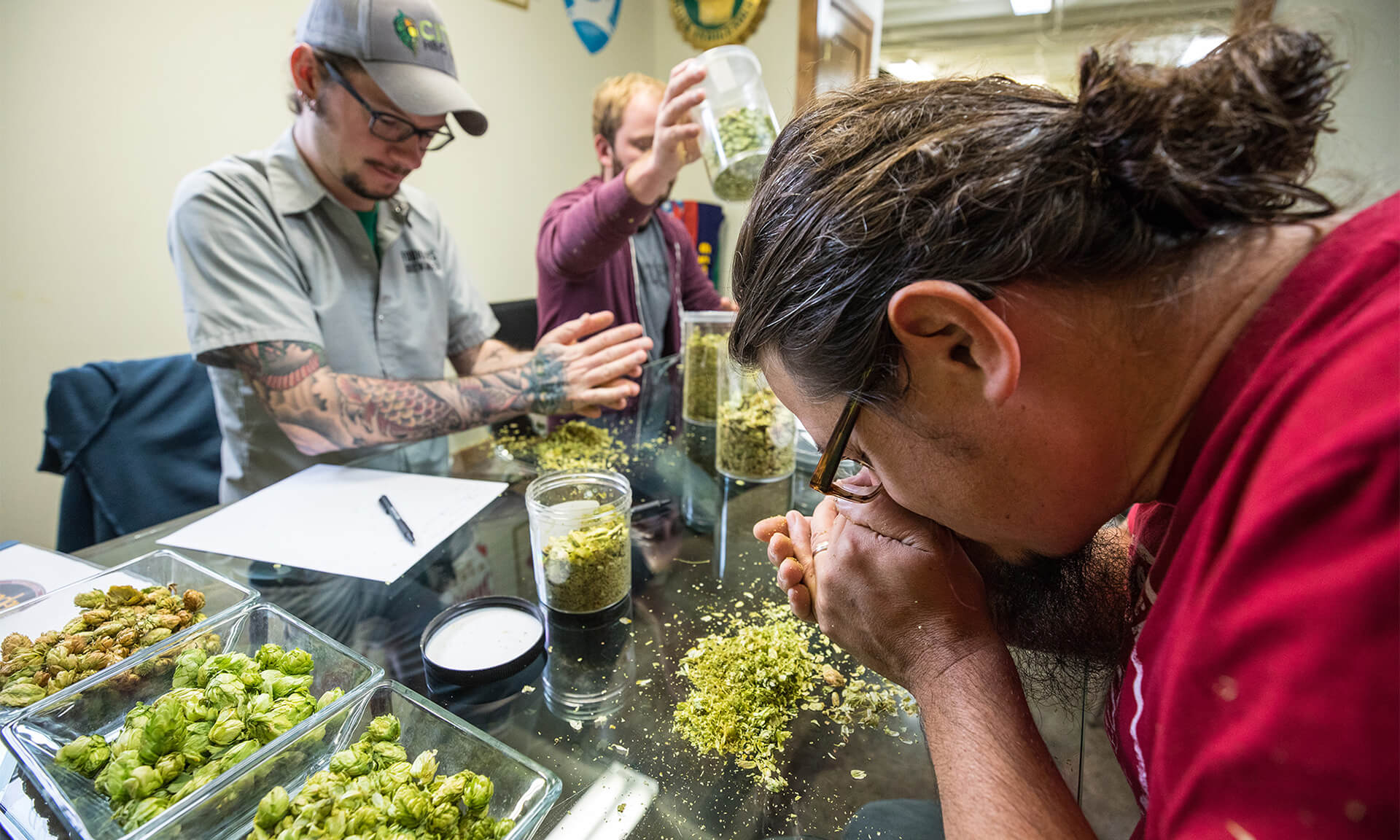 Brewers investigating the hops and packaging them into containers